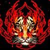 TheFirecat