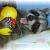 RaccoonGirl
