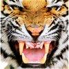 TigersKitten