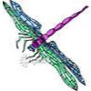 dragonfly58