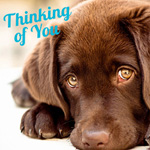 Thinking of You Electronic Gift Card