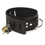 Hasp style collar reviews