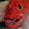 Salmonking