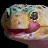 geckofreckles