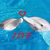 HornyDolphins