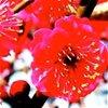 PlumBlossom